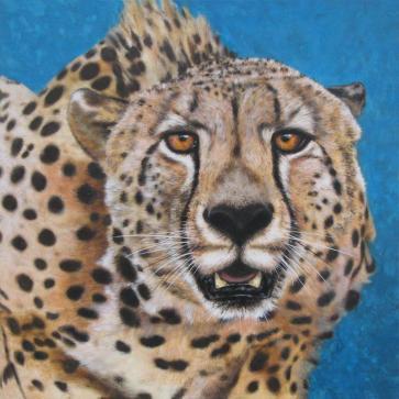 acinoniyx jubatus -  Gepard