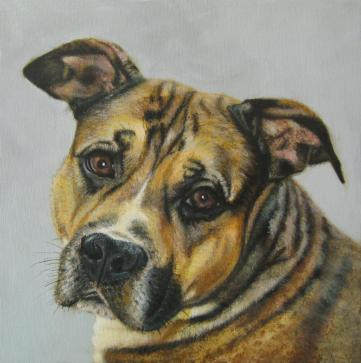 Boxer Dog - Boxer with a heart