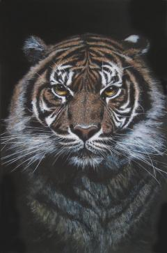 Tiger -  coming at you