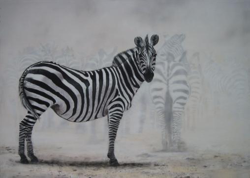 Zebra - the curious zebra
