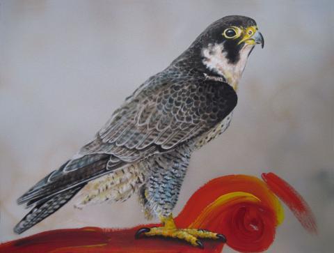 peregrine falcon - Wanderfalke