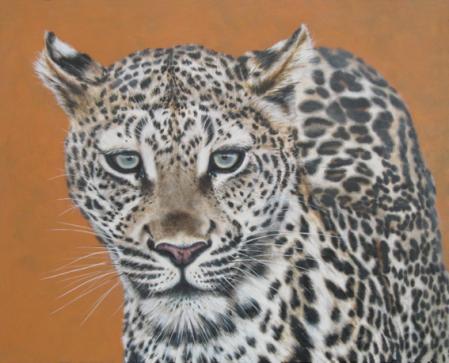Leopard -  pretty boy