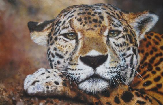 sad jaguar