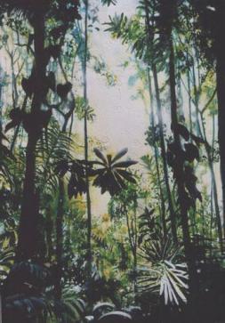 esquinas rainforrest/Costa Rica 2002 80 x 110 cm acryl on canvas